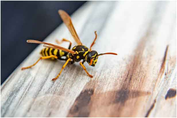9 tips to avoid pests at home